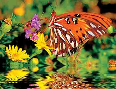 Springbok Magnificent Monarch 500 Piece Puzzles
