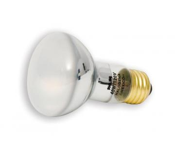 Philips Halogen 75W R20 Flood